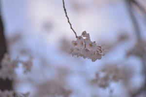 Nikon D600 SP 70-300mm F/4-5.6 Di VC USD (Model A005)で撮った花の写真